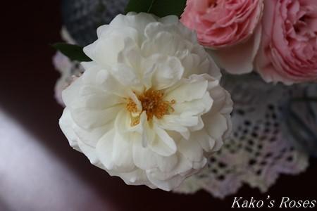 s-IMG_2259kako.jpg