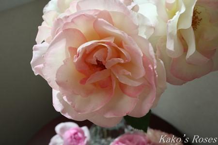 s-IMG_2268kako.jpg