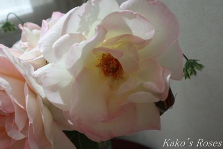 s-IMG_2269kako.jpg