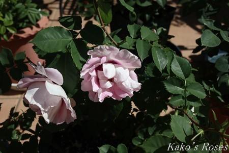 s-IMG_2277kako.jpg