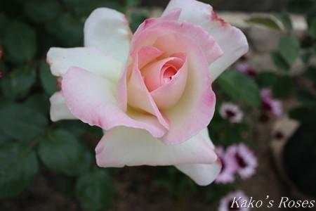 s-IMG_2319kako.jpg
