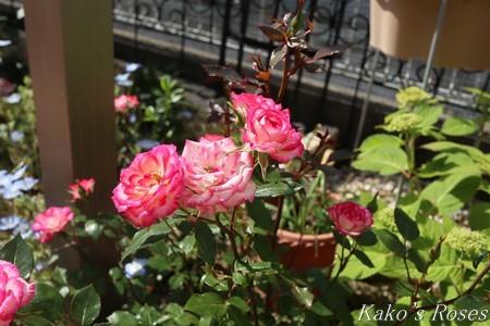 s-IMG_2366kako.jpg