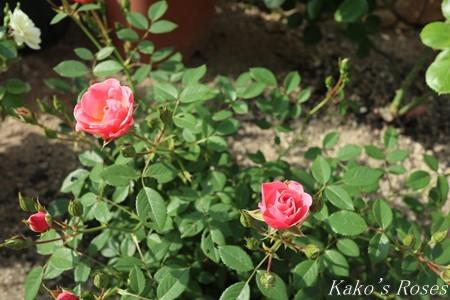 s-IMG_2413kako.jpg