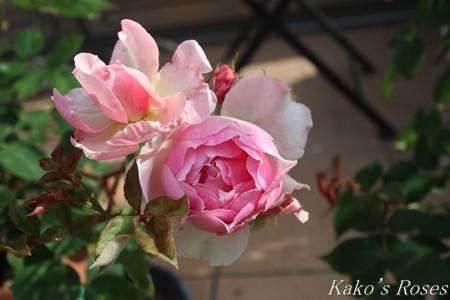 s-IMG_2419kako.jpg