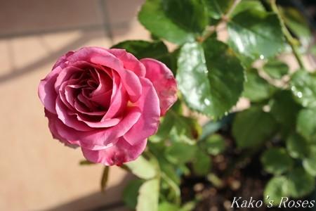 s-IMG_2420kako.jpg