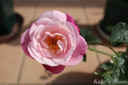 s-IMG_2458kako.jpg