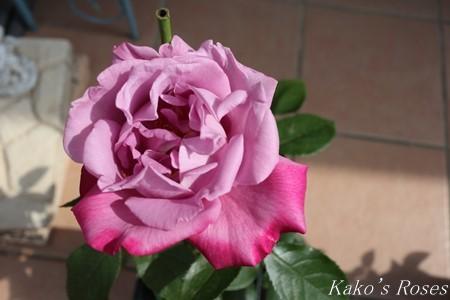 s-IMG_2459kako.jpg