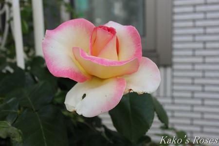 s-IMG_2507kako.jpg