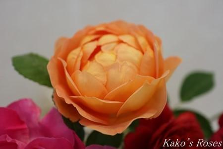 s-IMG_2513kako.jpg