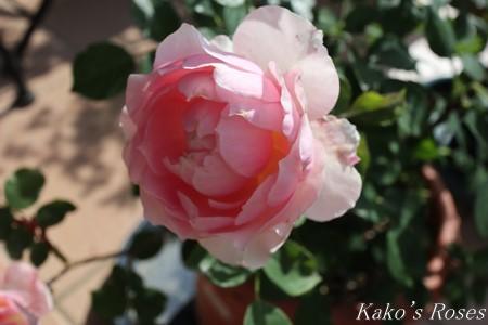 s-IMG_2515kako.jpg