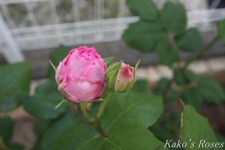 s-IMG_2533kako.jpg