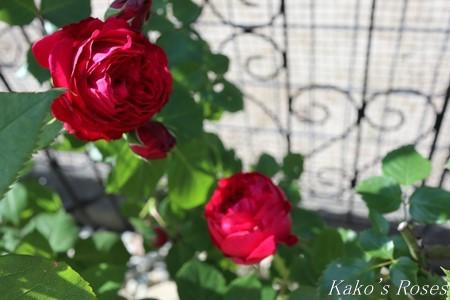 s-IMG_2535kako.jpg
