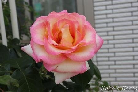 s-IMG_2553kako.jpg