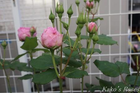 s-IMG_2603kako.jpg