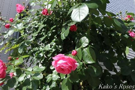 s-IMG_2607kako.jpg