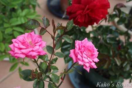 s-IMG_2629kako.jpg