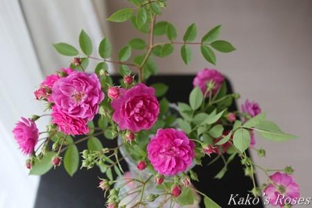 s-IMG_2652kako.jpg