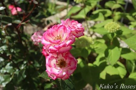 s-IMG_2664kako.jpg