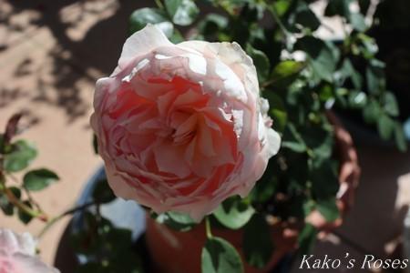 s-IMG_2665kako.jpg