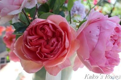 s-IMG_2667kako.jpg