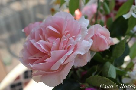 s-IMG_2668kako.jpg