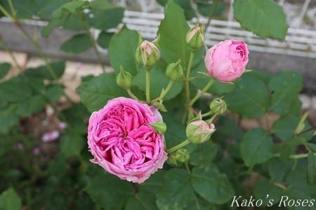s-IMG_2680kako.jpg