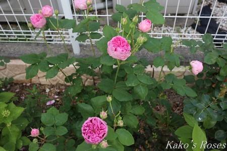 s-IMG_2681kako.jpg