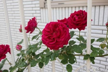 s-IMG_2682kako.jpg