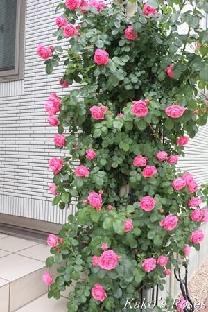 s-IMG_2692kako.jpg