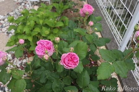 s-IMG_2721kako.jpg