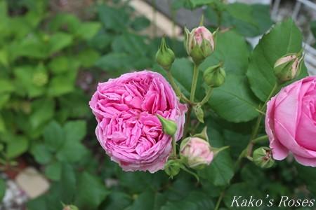 s-IMG_2722kako.jpg