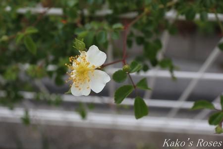 s-IMG_2728kako.jpg
