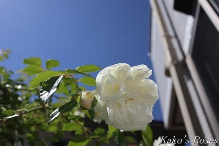 s-IMG_2744kako.jpg