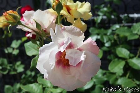 s-IMG_2759kako.jpg
