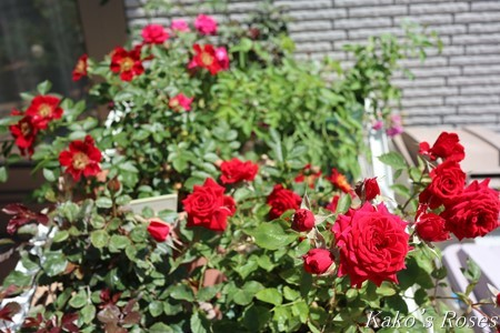 s-IMG_2787kako.jpg