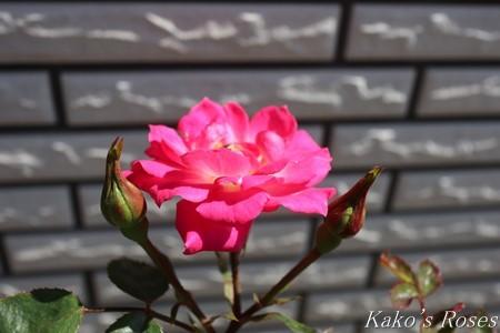 s-IMG_2826kako.jpg