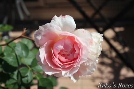s-IMG_2859kako.jpg