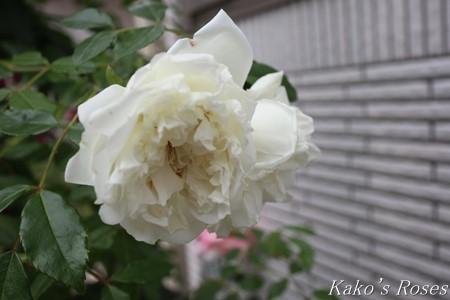 s-IMG_2941kako.jpg