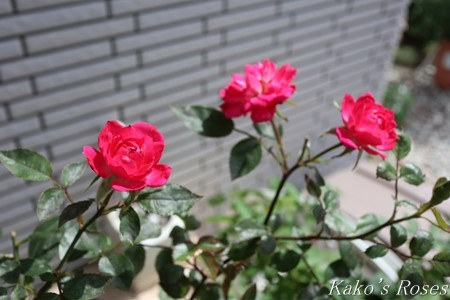 s-IMG_3009kako.jpg