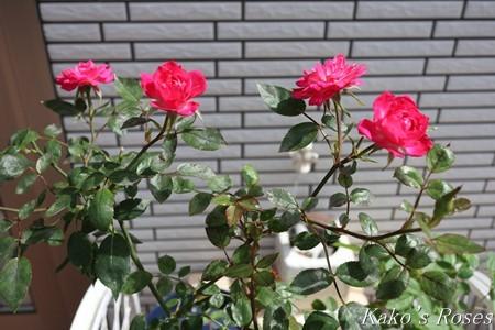 s-IMG_3010kako.jpg