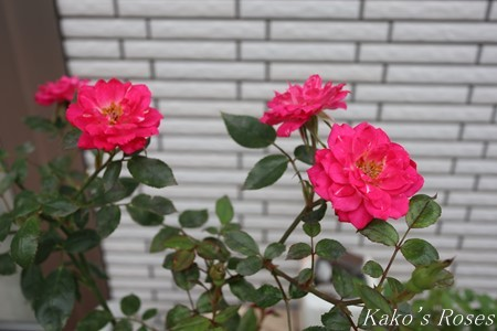 s-IMG_3053kako.jpg