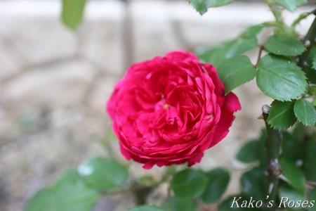 s-IMG_3093kako.jpg