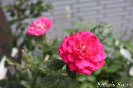 s-IMG_3109kako.jpg