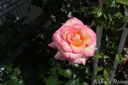 s-IMG_3184kako.jpg