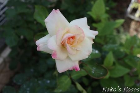 s-IMG_3189kako.jpg