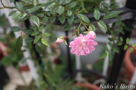 s-IMG_3287kako.jpg