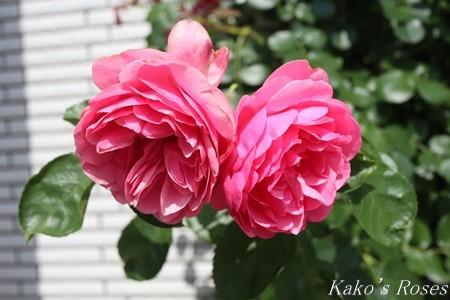 s-IMG_3288kako.jpg