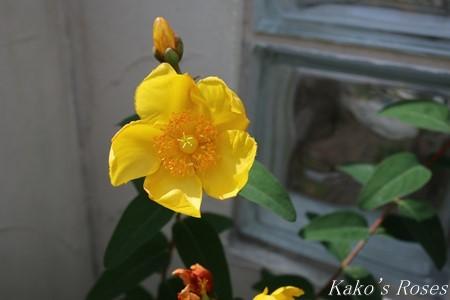 s-IMG_3292kako.jpg