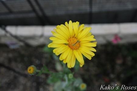 s-IMG_3305kako.jpg