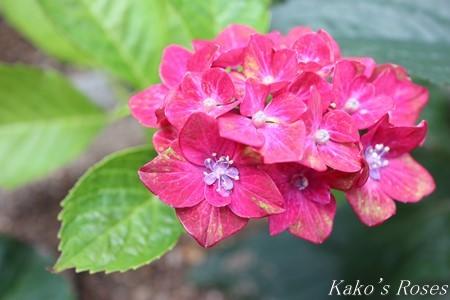 s-IMG_3469kako.jpg